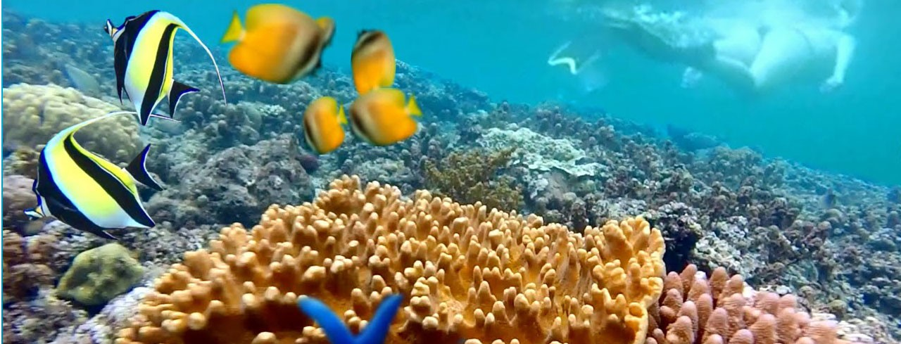 Екскурзия Бали – 7 екскурзии и възможност за водолазен курс