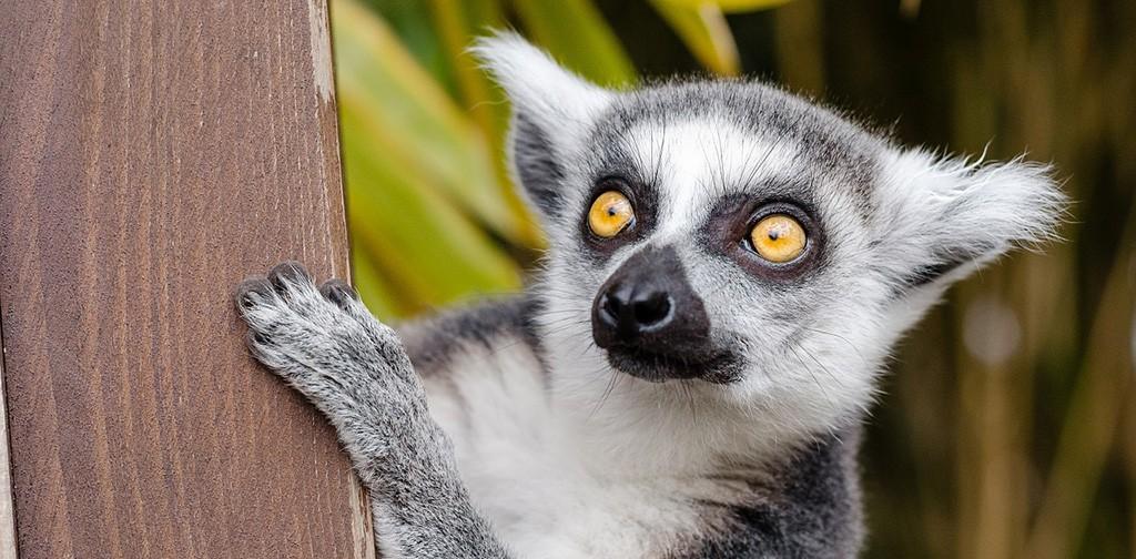 Mадагаскар – Магията на Осмият Континент