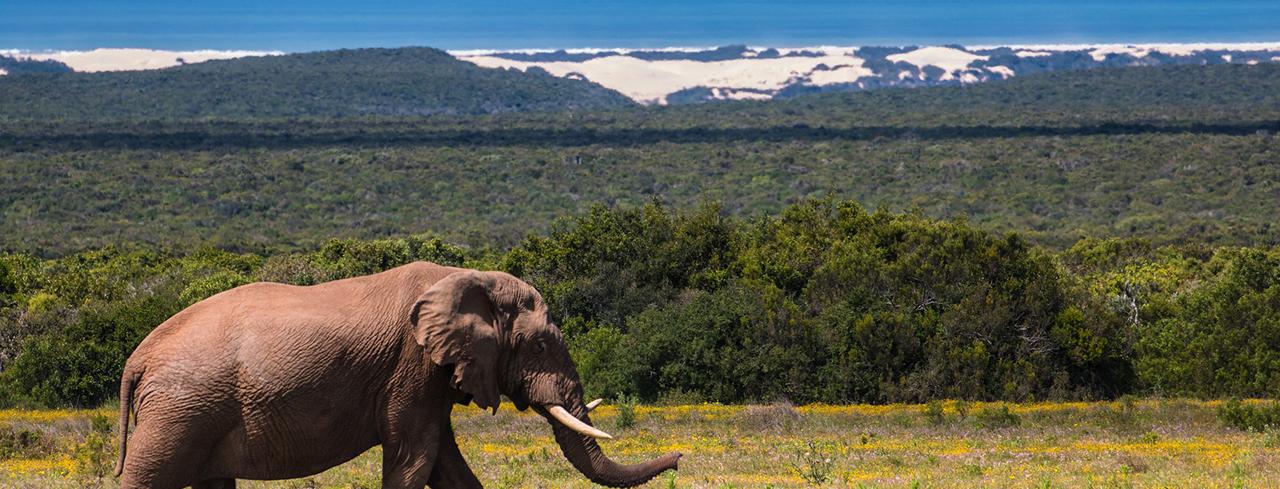 Екскурзия в Южна Африка, Зимбабве и Ботсвана