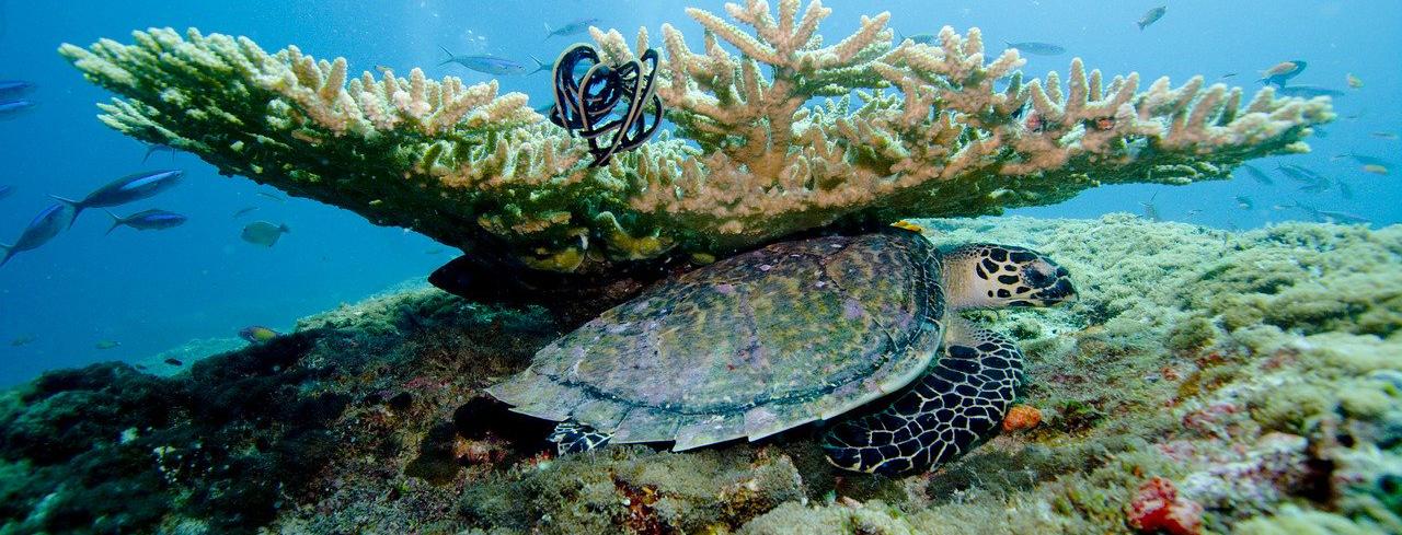 Почивка на Малдиви – удивителният рай на Земята