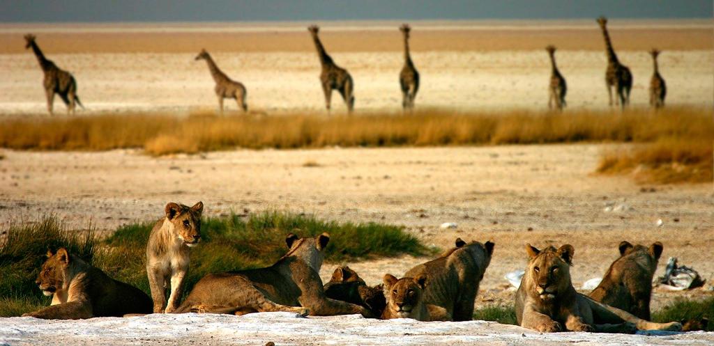 Екскурзия в Намибия – там където пустинята среща океана